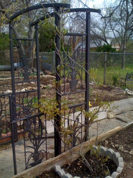 gate-tree